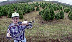 where to cut your own trees