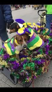 mardi gras jester ribbon dog mardi gras harlequin dog costume mardi gras costumes and dog