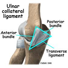 Lateral Collateral Ligament Ankle Ulnar Collateral Ligament Ucl Injury Houston Methodist