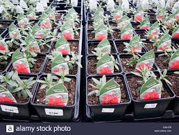 ornamental plants for sale in a garden centre center nursery