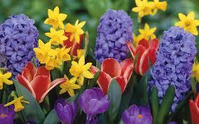 Beautiful Plants by Flower Flowers Petals Garden Nature Plants Beautiful Delicate