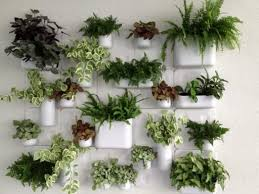 best 25 indoor wall planters ideas on pinterest outdoor wall