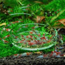 new aquarium shrimp glass feeder ornamental snail feeding