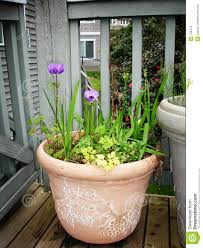 potted plants stock images image 132414