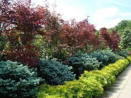 best 25 plants for sale ideas on plants