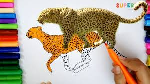 easy panther coloring pages learning colors and animals for kids