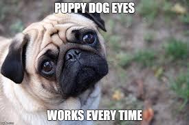 Puppy Eyes Meme - 8 funny pug memes what every dog deserves