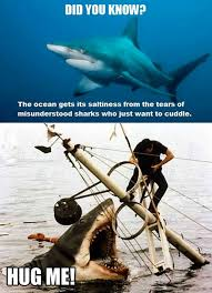 Funny Shark Memes - you know this about sharks meme