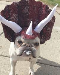 in costumes best 25 bulldog costume ideas on bull dog baby