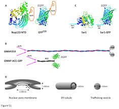 membrane curvature sensing by amphipathic helices is modulated by