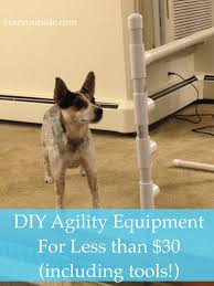 how to create your own agility equipment cattle dog and activities