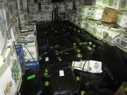 Interior Border Patrol Checkpoints Border Patrol 5 1 Million In Pot Seized In South Texas This