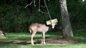 cops rescue deer stuck on backyard swing in center moriches newsday