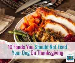 10 foods you should not feed your on thanksgiving comfy cozy