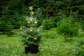 christmas tree farm vancouver bc christmas and accessories
