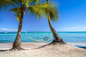 52 palm tree hammock tropical palm trees and hammock stock photo 52 palm tree hammock tropical palm trees and hammock stock photo image 22997120 bedfordmarket org