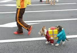 Halloween Costumes For Dogs Diy Dog Costume Pinx Pets