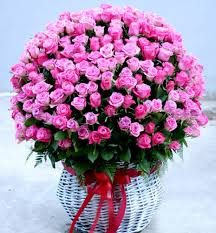 100 Roses 100 Shocking Pink Roses Applekorean