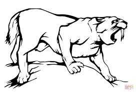 sabre tooth tiger coloring page free printable coloring pages