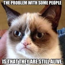 Funny Angry Memes - 11 angry cat memes very funny 2013 funny pointless gibberish