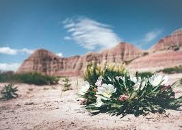desert flower u2014 bossfight