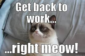 Working Cat Meme - 10 things we ve all experienced during finals week explained