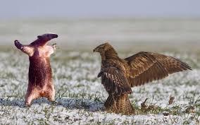 Anteater Meme - darkspyro spyro and skylanders forum stuff and nonsense anteater