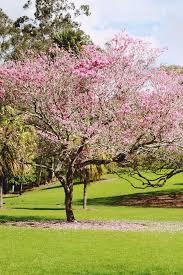 Kansas City Botanical Gardens by 25 Best City Botanic Gardens Ideas On Pinterest Nyc Botanical
