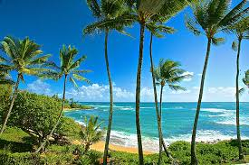 Kauai Bed And Breakfast Homes Cottages Oceanfront Condos Budget Condos Rosewood