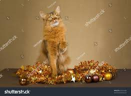 somali cat bronze gold christmas decorations stock photo 62101420