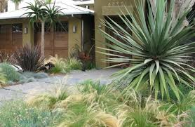 king palm tree landscape contemporary with walkway pool drain covers