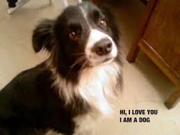 Cute I Love You Meme - dog hi i love you meme nikola tosic
