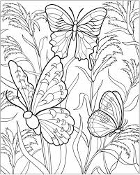 60 desenhos adultos dover publications dovers butterfly