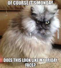 Monday Cat Meme - monday cat meme meows and purrs