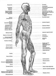 A Picture Of The Human Anatomy Human Body Poster Knowlege Pinterest High Posters