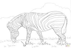 flamingo zebra coloring page pages online for preschoolers cute