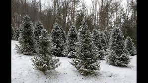 5 places to choose cut christmas trees in the southeast wsb tv