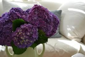 Purple Hydrangea Purple Hydrangeas From My Parent U0027s Garden Cottage Fix