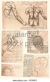 Leonardo Da Vinci Human Anatomy Drawings Vinci Leonardo Da Muscles Stock Photos U0026 Vinci Leonardo Da Muscles