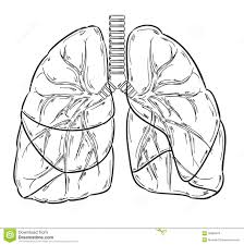 lungs sketch stock vector image 39982679