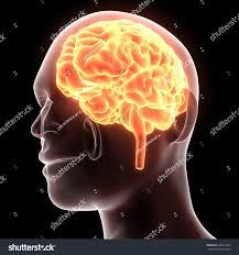 3d Head Anatomy 3d Illustration Human Brain Anatomy Stock Illustration 438413455