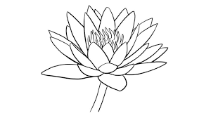 Simple Lotus Flower Drawing - how to draw water lily easily step by step youtube