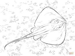 stingray coloring page deep sea fishes coloring pages free