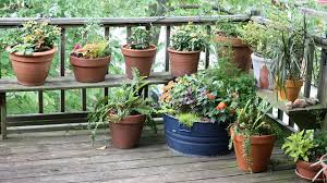 Container Gardening Peas - grow your own u201ccontainer garden u201d the isha blog
