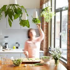 kitchen garden ideas kitchen vertical garden vertical kitchen gardening