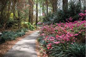 beautiful spring with food drink and history nacogdoches offers more than
