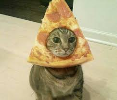 Meme Pictures No Words - no words needed laughs pinterest pizza cat funny pictures