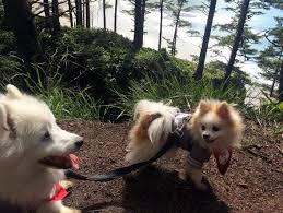 Blind Dog And Friend This Blind Dog Finds His Way Around With His Best Friend By His Side