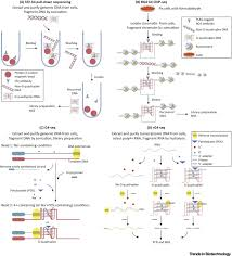 Flag Tag Dna Sequence G Quadruplexes Prediction Characterization And Biological