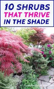 25 beautiful shade shrubs ideas on pinterest shade loving